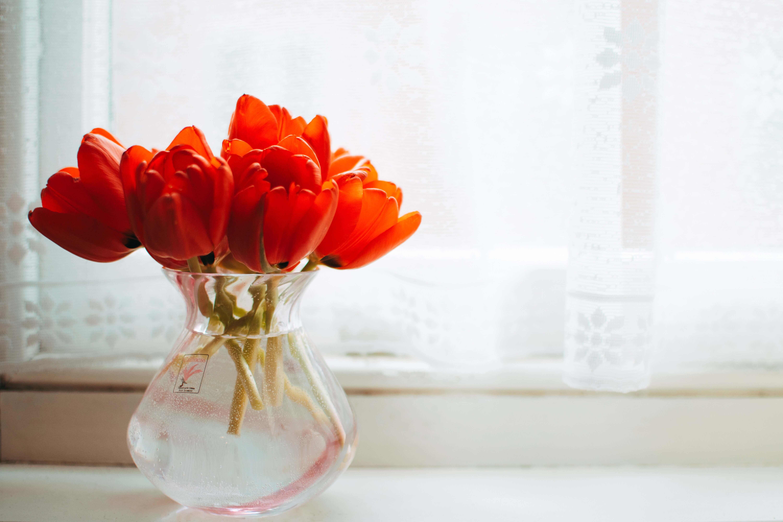 kwiatek na parapecie